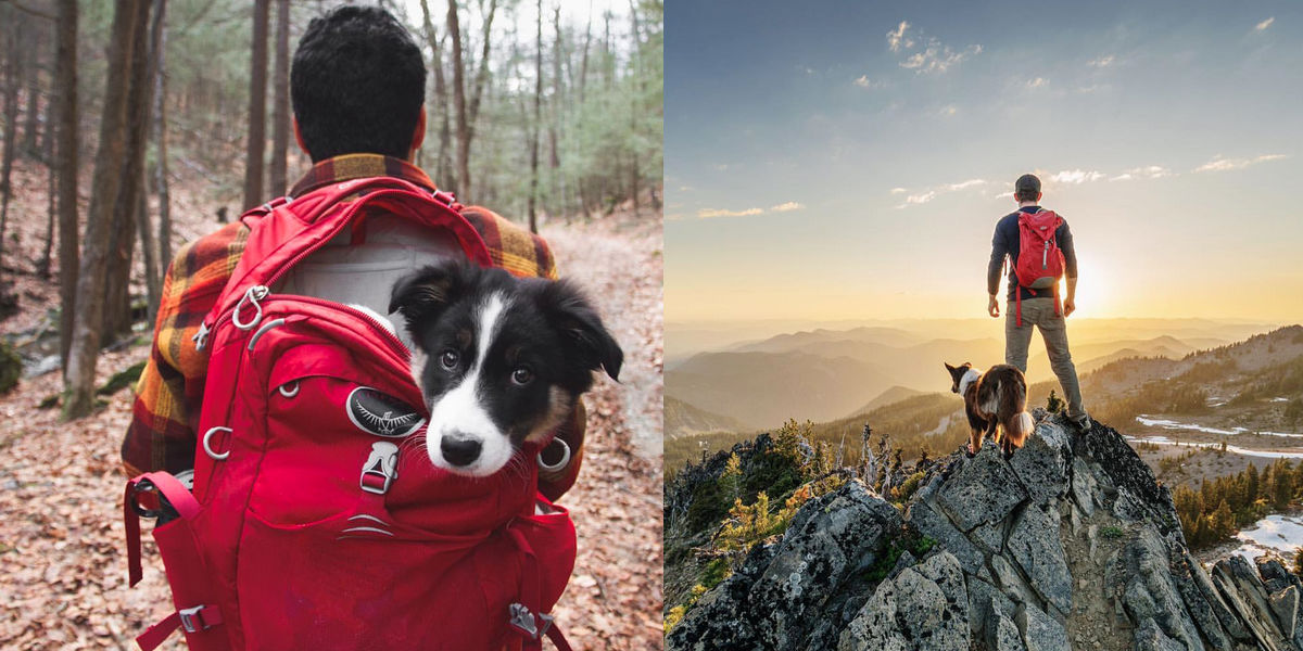 These Instagram Photos Will Make You Go Camping With Your Dog